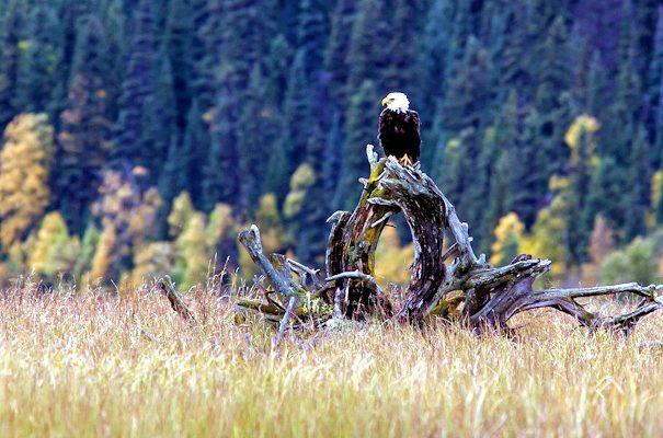 pg_eagle